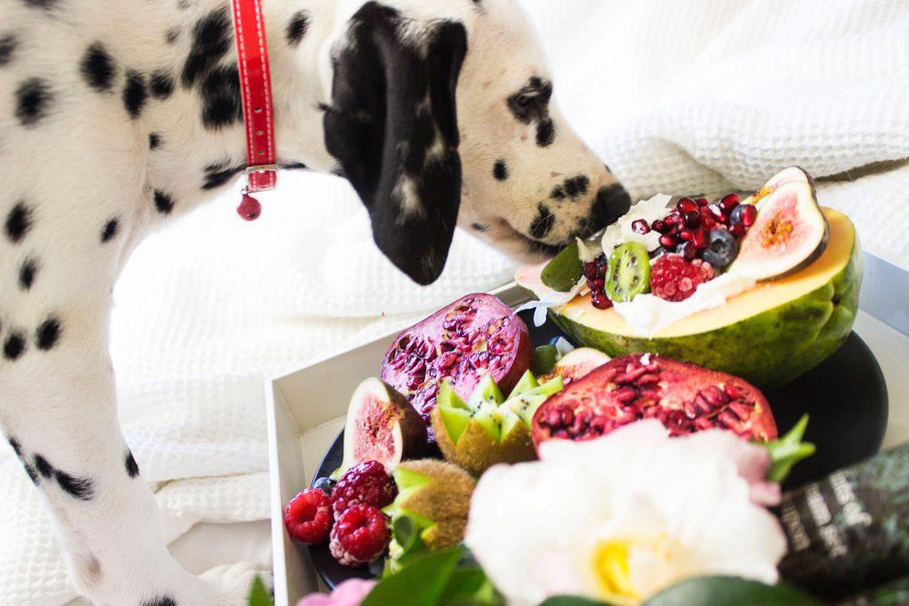 강아지 채식