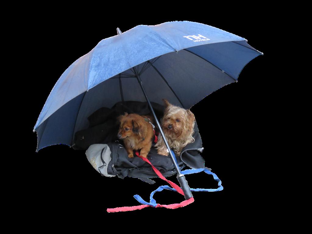 비 오는 날 강아지