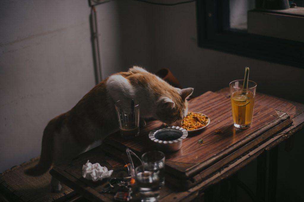 고양이 음식