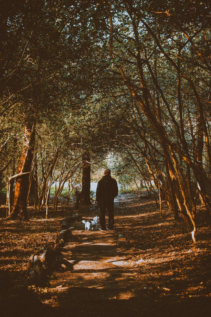 노견 산책