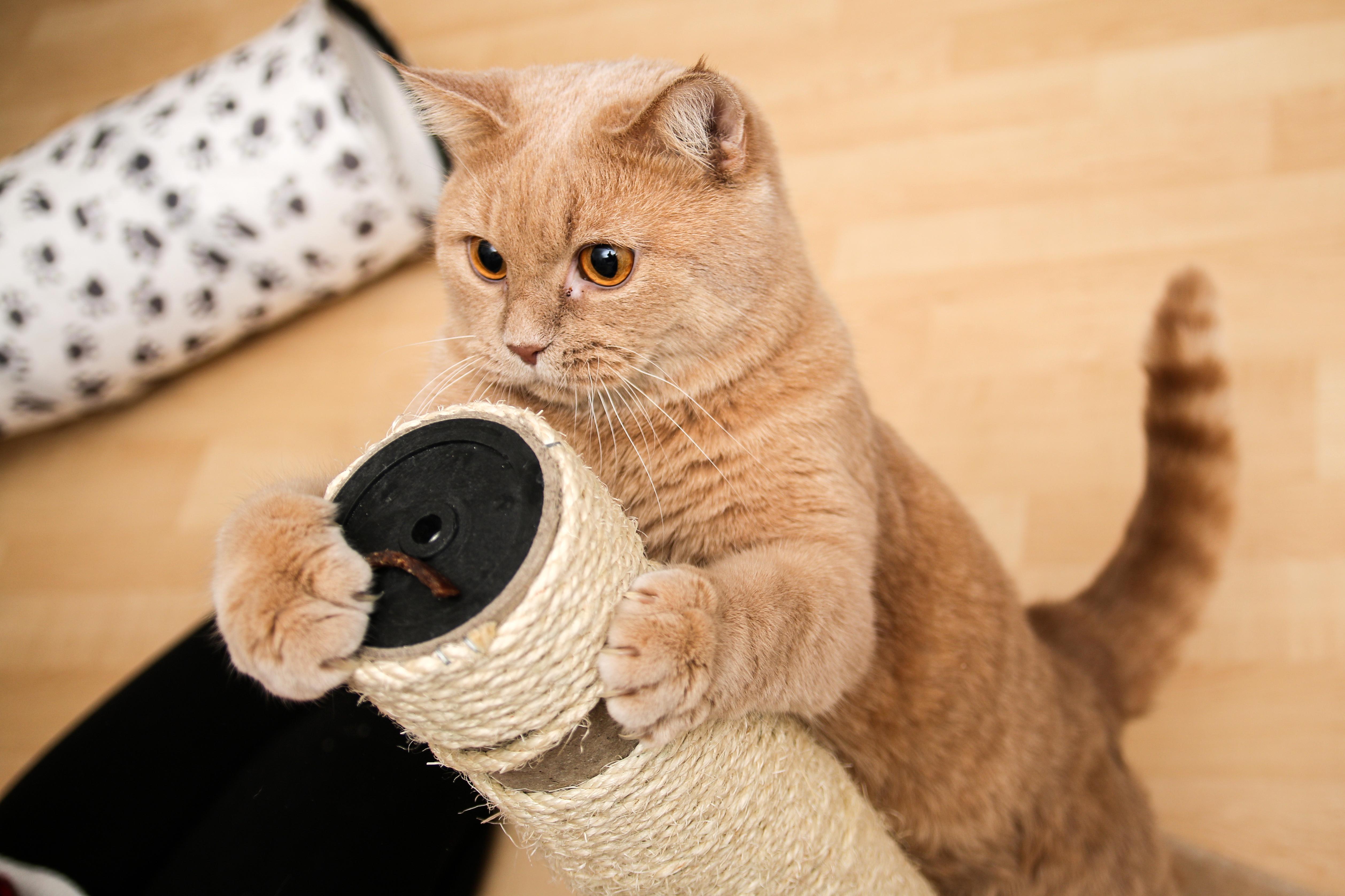고양이 재우기