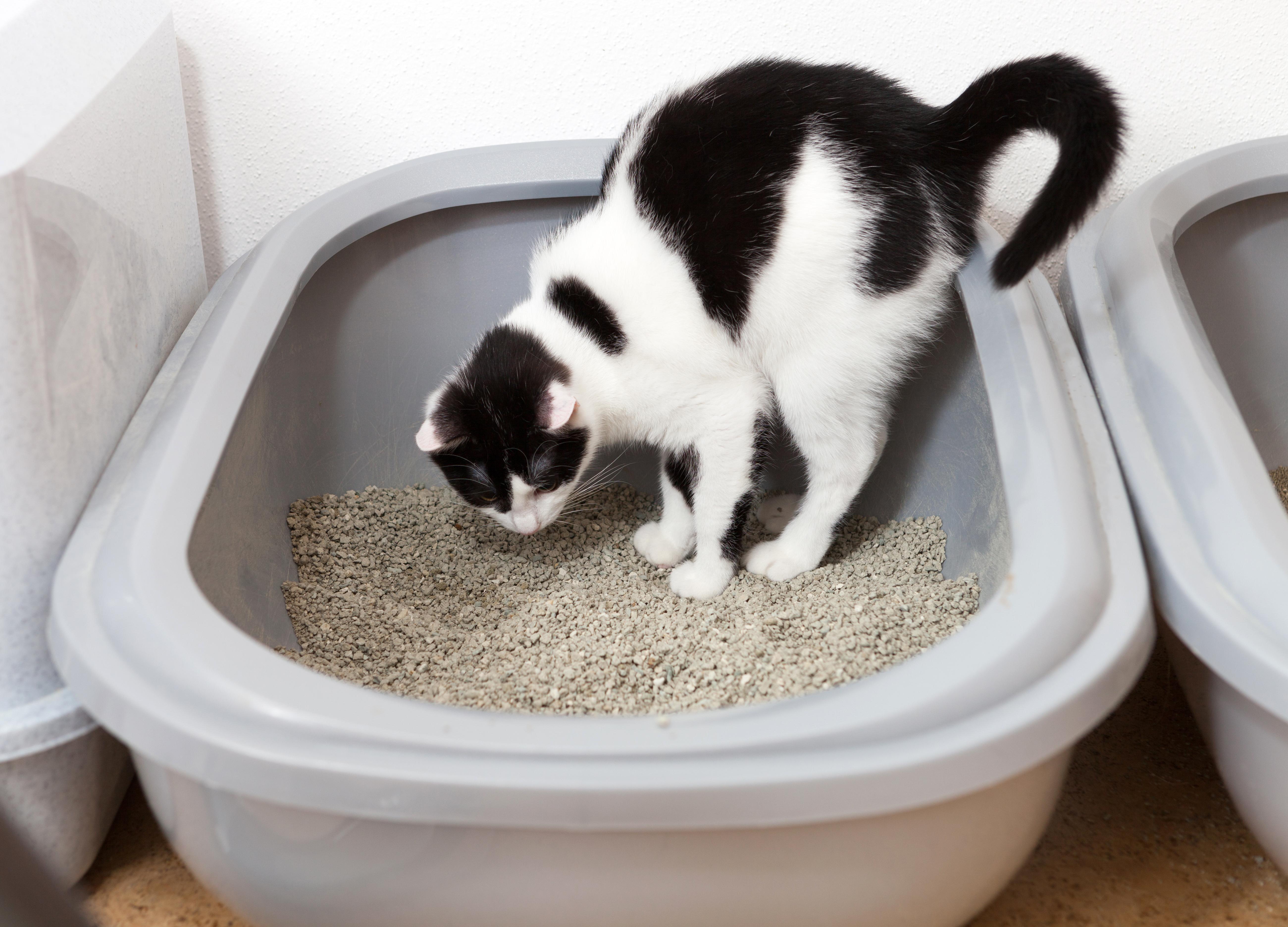 고양이 화장실 냄새