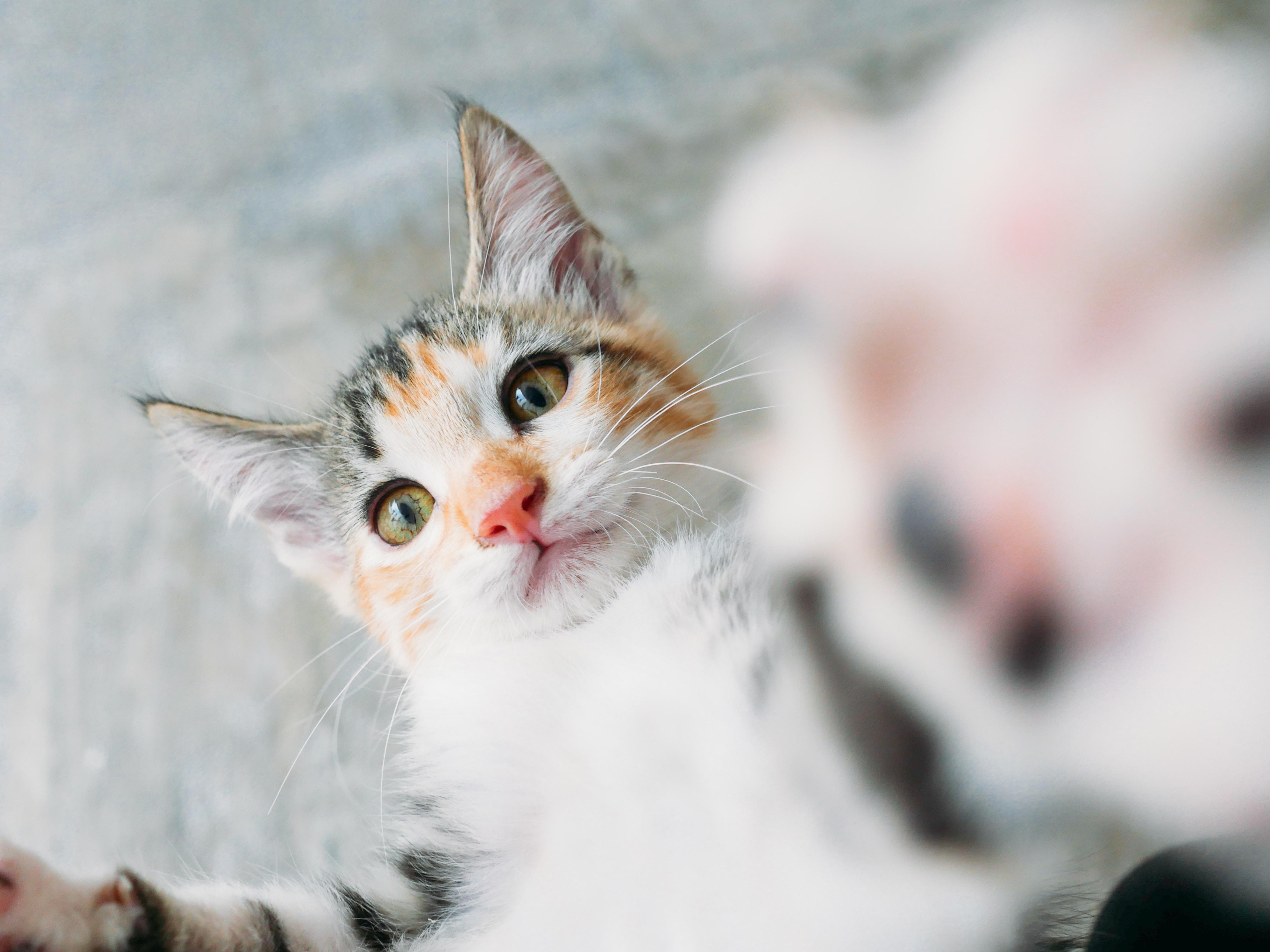 어리광쟁이 고양이